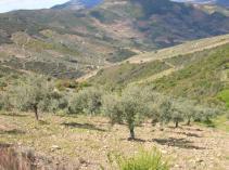 agricultura_conservación