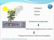 fertilizacion
